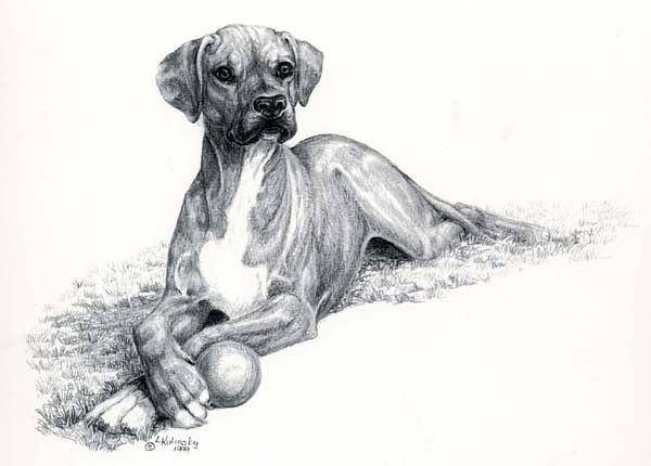 Drawing - Want To Play by Laurie McGinley