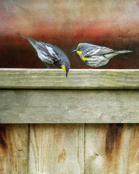 Wall Art - Photograph - Warbers On The Fence by Rebecca Cozart