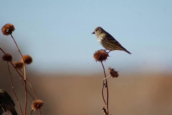Photograph - Warbler by Michael Raiman