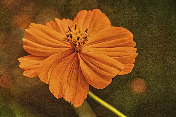 Photograph - Warm Glow Of Summer by Theo O'Connor