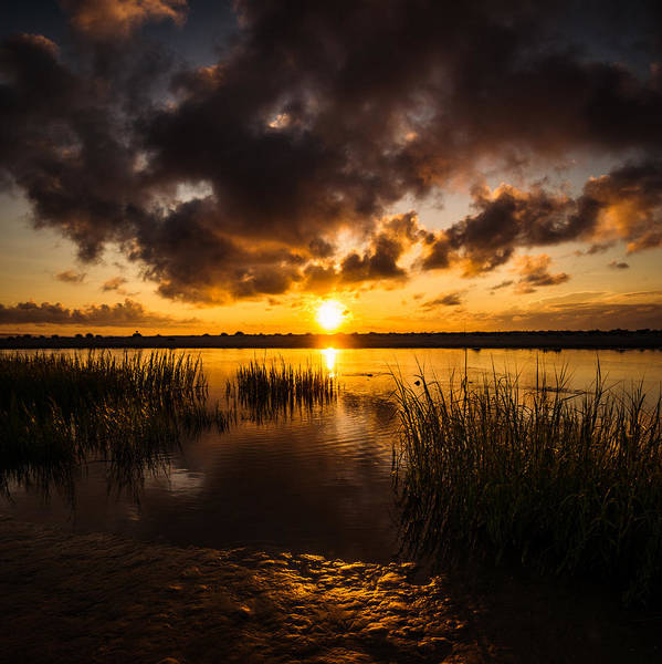 Photograph - Warm Inlet Reeds by Chris Bordeleau