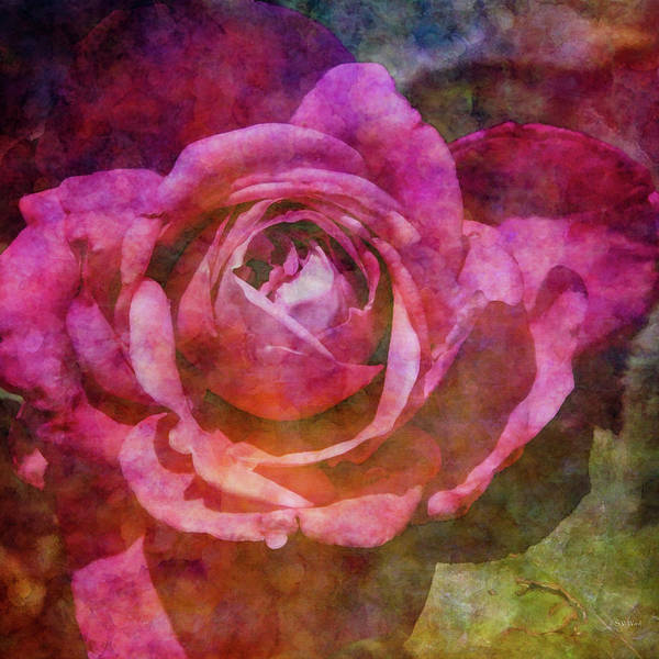 Photograph - Warm Pink Rose 1522 Idp_2 by Steven Ward
