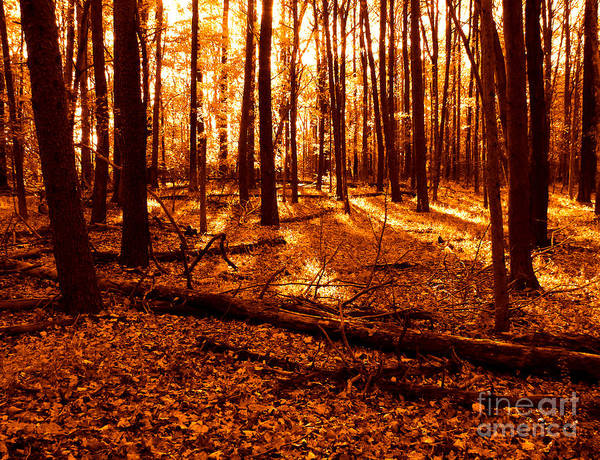 Photograph - Warm Woods by Olivier Le Queinec