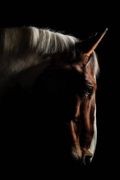 Nose Photograph - Warmblood by Samuel Whitton