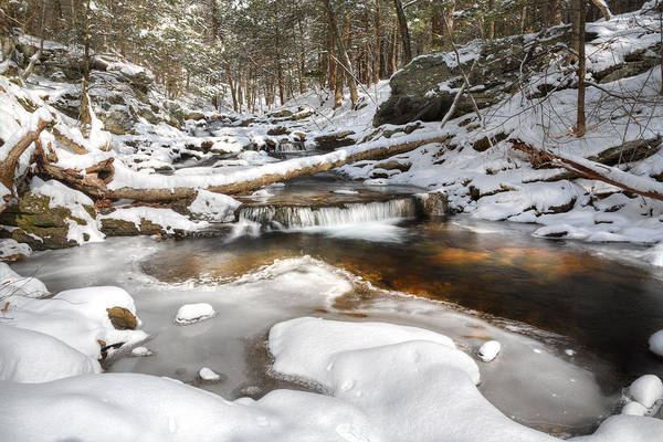 Photograph - Warming Winter by Bill Wakeley