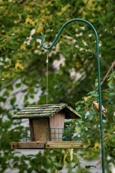 Photograph - Wary Bird by Onyonet  Photo Studios