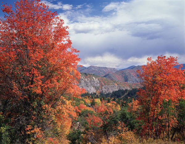 Photograph - 212m45-wasatch Mountains In Autumn  by Ed  Cooper Photography