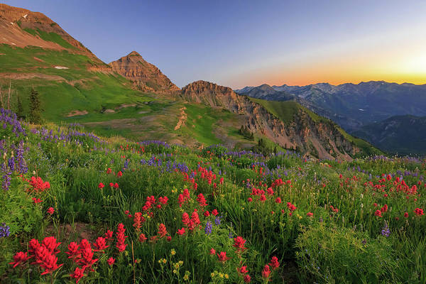 Photograph - Wasatch Wildflowers In Dawn Light. by Johnny Adolphson
