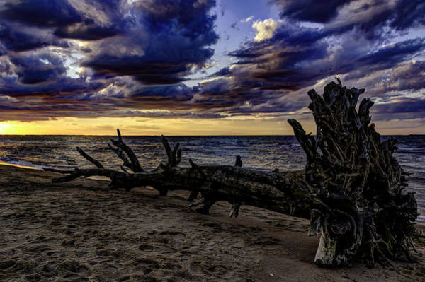 Photograph - Washed Ashore by Pete Federico