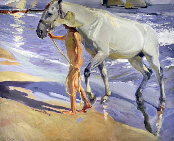 White Horse Wall Art - Painting - Washing The Horse by Joaquin Sorolla y Bastida