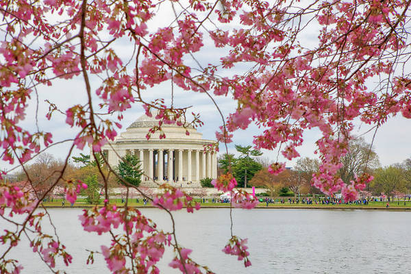 Photograph - Washington Dc Cherry Blossom by Juergen Roth