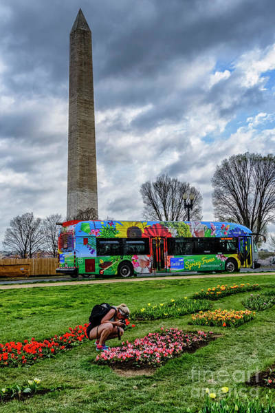 Photograph - Washington Monument And Tulip Library by Thomas R Fletcher