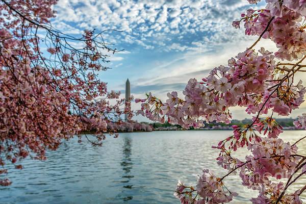 Wall Art - Photograph - Washington Monument Through Cherry Blossoms by Thomas R Fletcher
