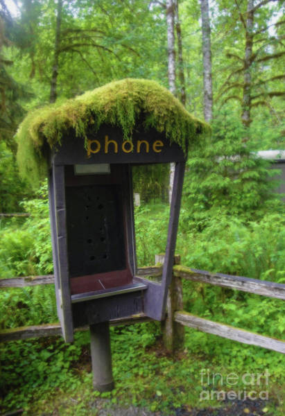 Photograph - Washington Rain Forest Phone Booth by Gregory Dyer