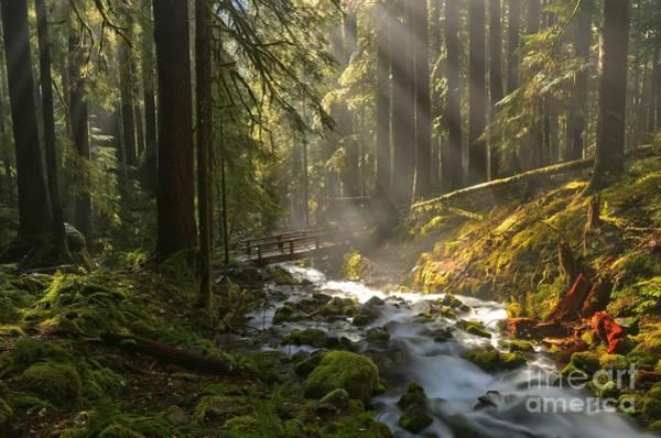 Photograph - Washington Wilderness by Adam Jewell