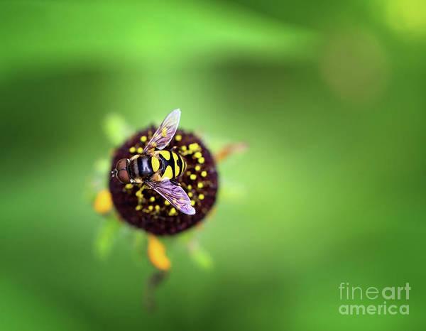 Photograph - Wasp Beauty by Karen Adams