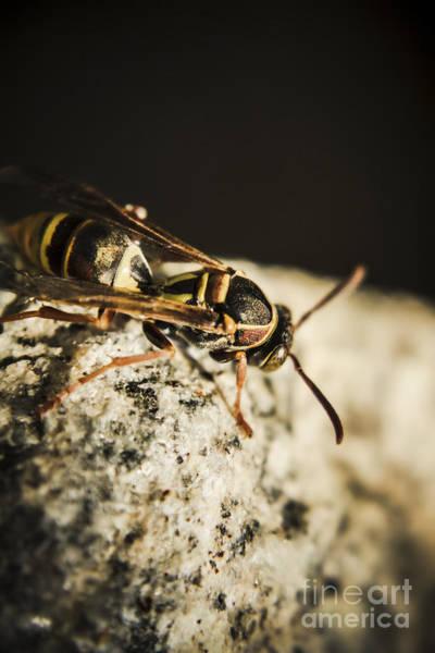 Australian Wildlife Wall Art - Photograph - Wasp Hunt by Jorgo Photography - Wall Art Gallery