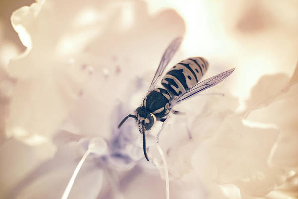 Photograph - Wasp In Ir by Brian Hale