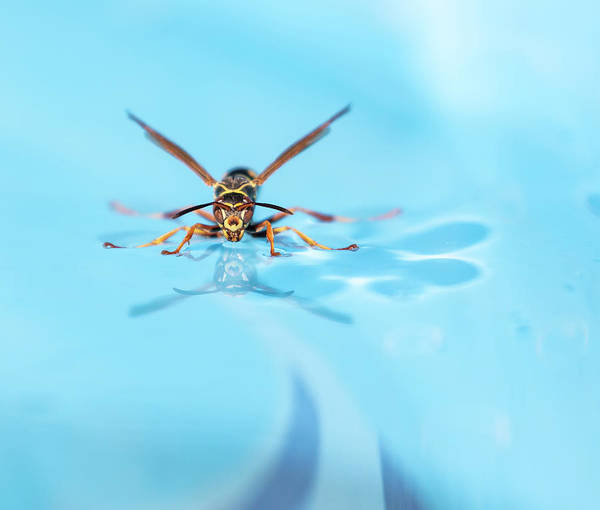 Wall Art - Photograph - Wasp On Water 2018-1 by Thomas Young