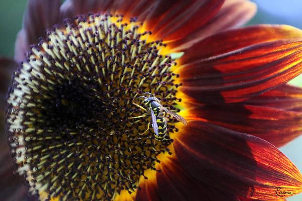 Photograph - Wasp by Rasma Bertz