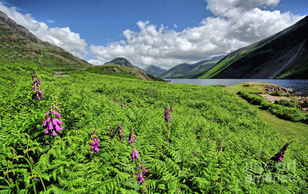Wall Art - Photograph - Wastwater Foxgloves by Smart Aviation