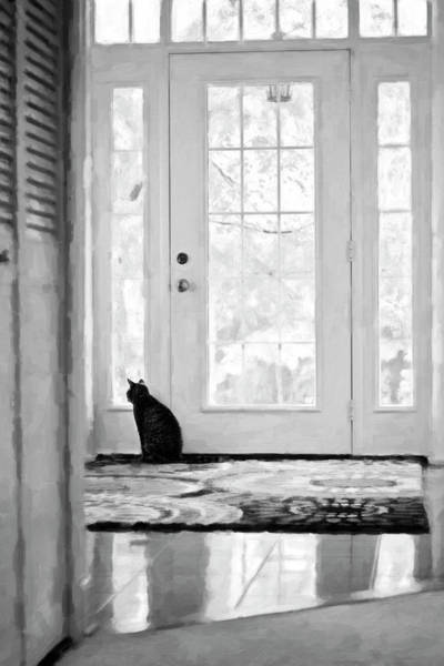 Photograph - Watch Cat by Sue Collura