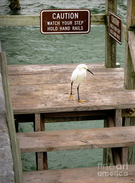 Photograph - Watch Your Step, Fort Desoto Park, St. Petersburg, Fl  -70381 by John Bald