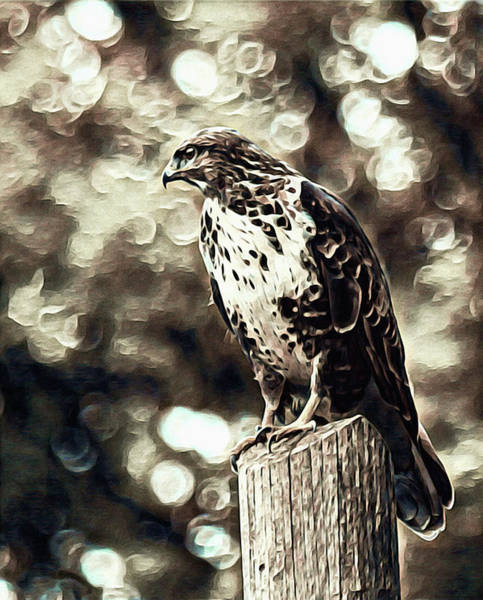 Photograph - Watcher Of The Wing by Susan Maxwell Schmidt