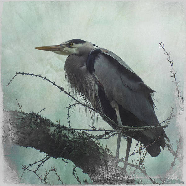 Photograph - Watchful Heron by Marilyn Wilson