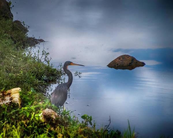 Photograph - Watchful  by Judy Hall-Folde