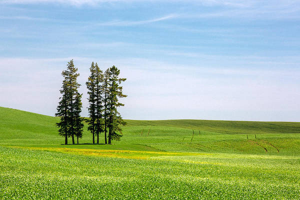 Photograph - Watchin Over The Palouse by Todd Klassy