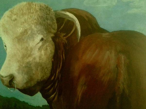 Hereford Bull Painting - Watching by Alan Kennedy