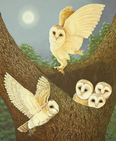 Barn Owl Painting - Watching And Waiting by Pat Scott