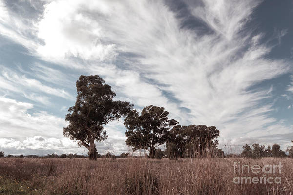 Wall Art - Photograph - Watching Clouds Float Across The Sky by Linda Lees