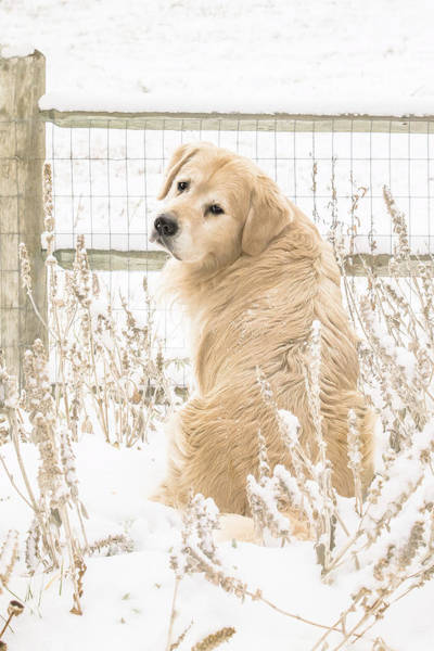 Photograph - Watching It Snow by Jennifer Grossnickle