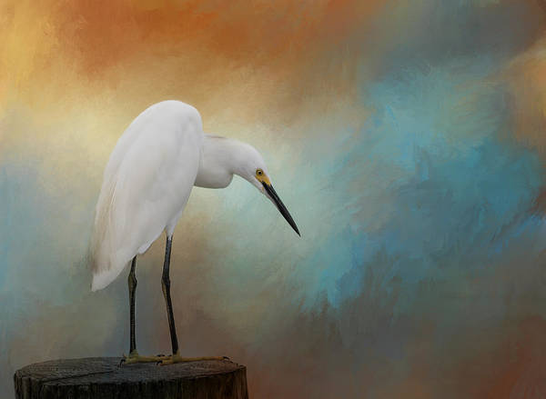 Egret Photograph - Watching by Kim Hojnacki