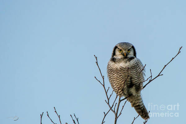 Photograph - Watching Owl Eyes by Torbjorn Swenelius