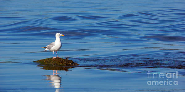 Photograph - Watching Seagull by Lutz Baar
