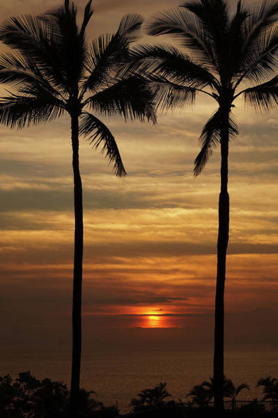 Photograph - Watching The Setting Sun by Pamela Walton