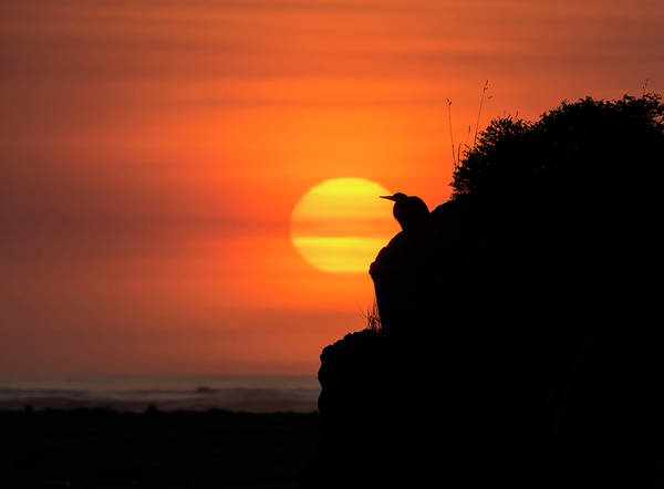 Photograph - Watching The Sun Go Down by Loree Johnson