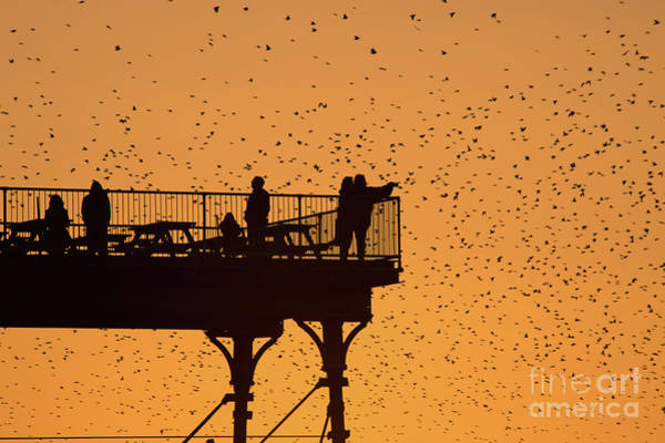 Watching The Sunset And Starlings In Aberystwyth Wales Art Print