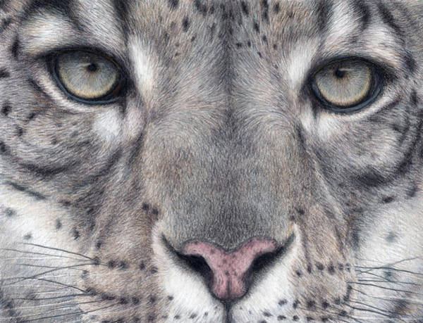 Snow Leopard Wall Art - Painting - Watching You...snow Leopard by Pat Erickson