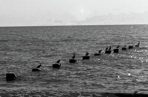 Photograph - Water Birds by Michelle Hoffmann