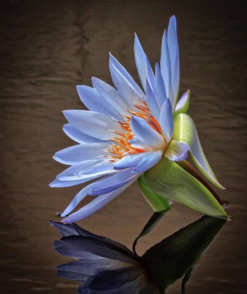 Wall Art - Photograph - Water Bloom by Robert Pilkington