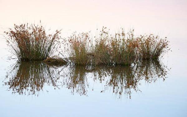 Photograph - Water Borne by AJ Schibig