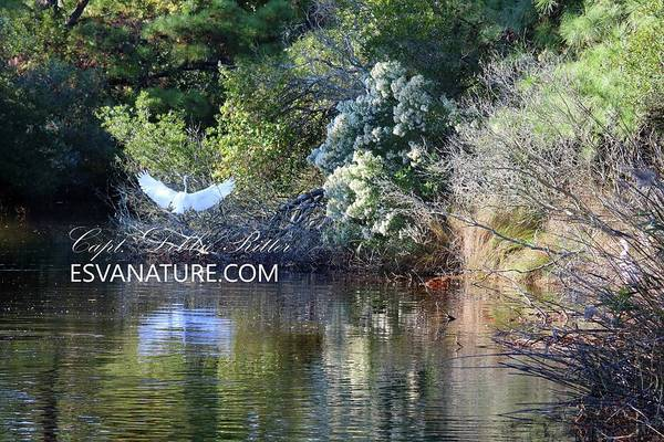 Photograph - Water Color Glade by Captain Debbie Ritter