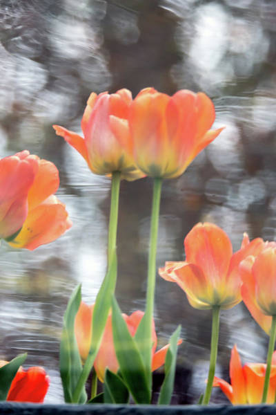 Photograph - Water Color Reflections 1 by Brian Hale
