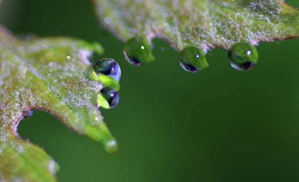 Photograph - Water Droplet IIi by Richard Rizzo