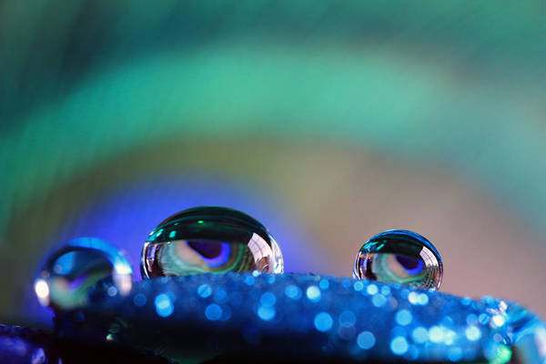 Photograph - Water Drops Macro by Angela Murdock