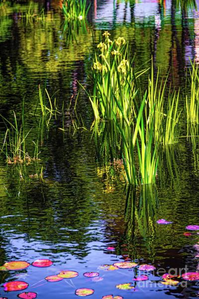 Photograph - Water Dwellers by Jon Burch Photography